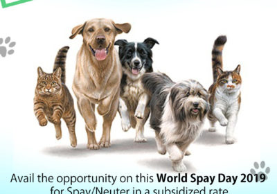 World Spay Day, 2019